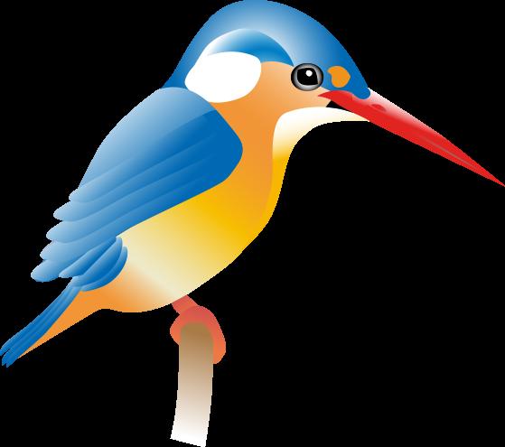 kingfisher-bird